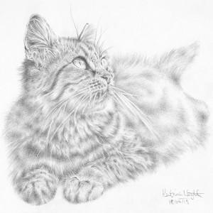 Spy-Cat-Hand-Drawing