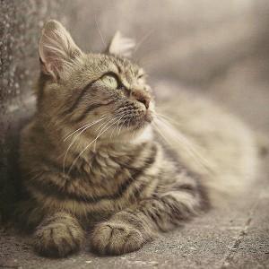 Spy-Cat-Original-Photo