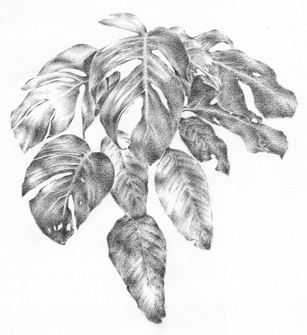 Original Hand Drawing for Urban Jungle Leaf Pattern Design by The Kat & Monocle